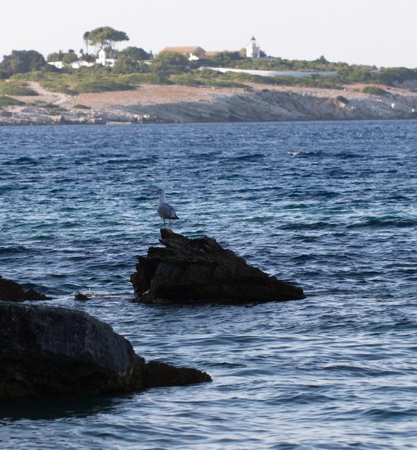 Γλάρος πάνω σε βράχο στο paxos beach hotel, Παξοί
